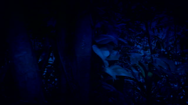 Moving Through Dense Jungle At Night Side View