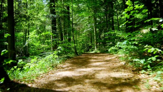 w celu przechylenia obiektywu należy przesunąć kardan przeniesienie las z creek (4 k/uhd do hd) - wiejska droga filmów i materiałów b-roll