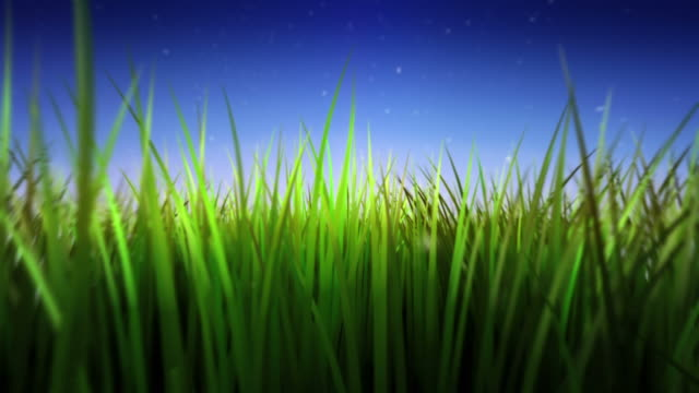 Moving through long and green grass. Loopable. video