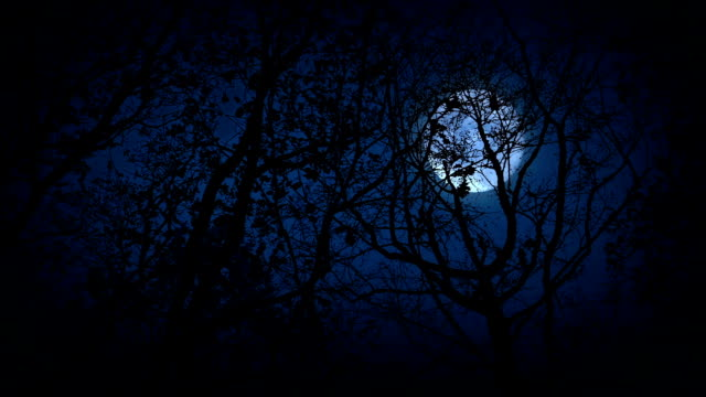 Moving Through Scary Woods Looking Up At Full Moon