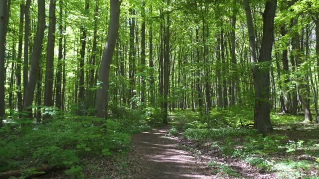 春の森を移動する ビデオ