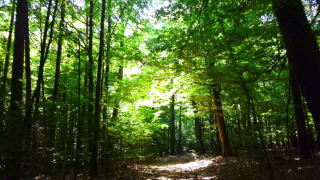 Moving Through Spring Forest – film