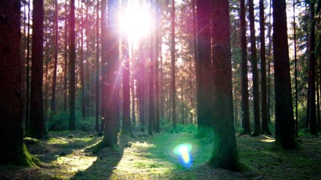 vídeos y material grabado en eventos de stock de gimbal pasar a través de un bosque de la primavera soleada (4 k uhd a/hd - stabilized shot