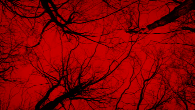 Moving Under Dark Trees On Red Sky Abstract video