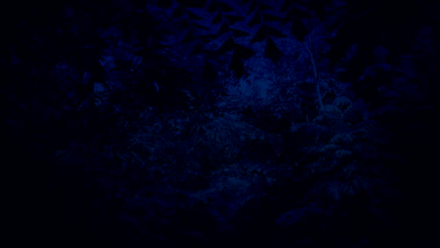 Moving Under Dense Jungle Canopy At Night video