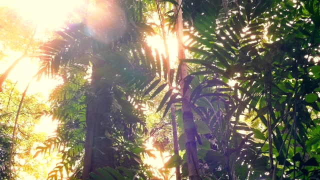 Moving Under Huge Jungle Plants With Sun Flare video