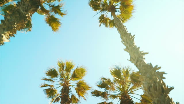 Moving under the palm trees. Palm tree view in a beautiful sunny day in Barcelona. Slow motion scene. low angle view stock videos & royalty-free footage
