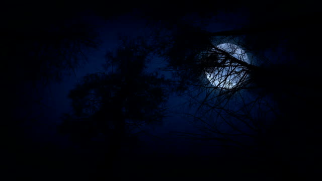 moving under trees with full moon at night - trees in mist stock videos & royalty-free footage