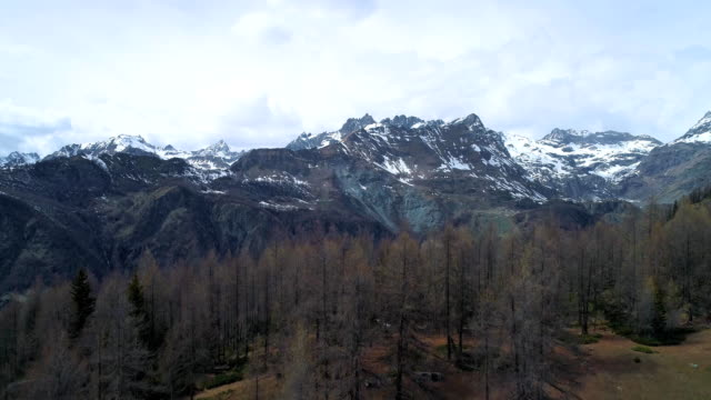moving up discovering above pine fir or larch woods forest and snowy mountain in autumn. Fall Alps outdoor nature scape mountains wild aerial establisher.4k drone flight establishing shot video