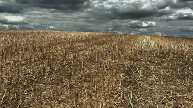 mown agriculture field - ausgedörrt stock-videos und b-roll-filmmaterial