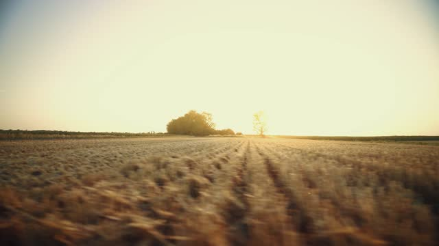Mown field. Agriculture. Land after harvesting wheat. Summer sunset over a stubble field.