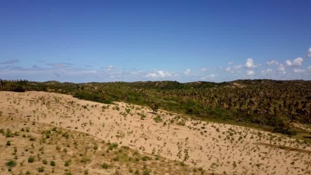 vídeos de stock e filmes b-roll de mozambique tofo palm plantation vegetation - oleo palma