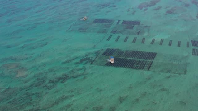 Mozoku seaweed farming by boat Okinawa Japan drone view