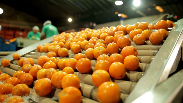 máquina funcionando em indústria de laranja - orangensaft stock-videos und b-roll-filmmaterial