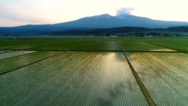 長海山 - 水田点の映像素材/bロール