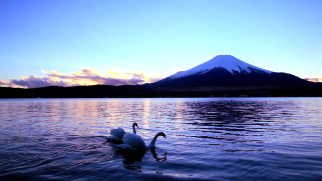 stockvideo's en b-roll-footage met mt fuji and swan couple swimming at dusk - vogel herfst