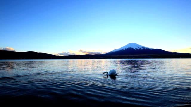 富士山やスワンカップルのプールの夕暮れ - 野生動物旅行点の映像素材/bロール