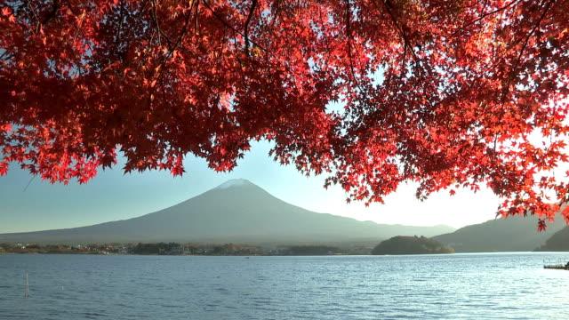 Mt.Fuji and Autumnal Leaves in Kawaguchi Lake,Yamanashi,Japan video