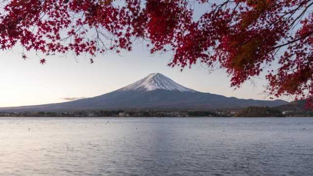 Mt.Fuji with autumn red leaves tilt up video