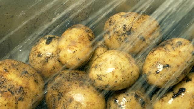 muddy potatoes get soil washed off in sink - przygotowany ziemniak filmów i materiałów b-roll