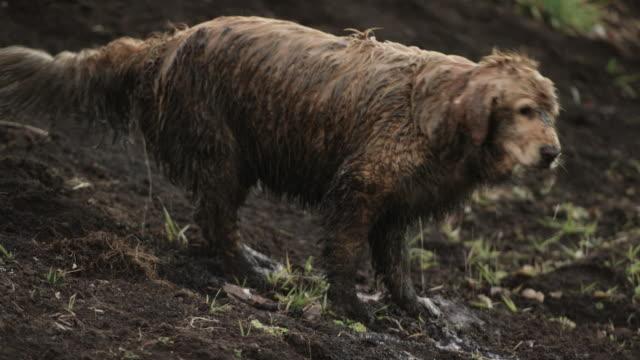 Muddy Shakes