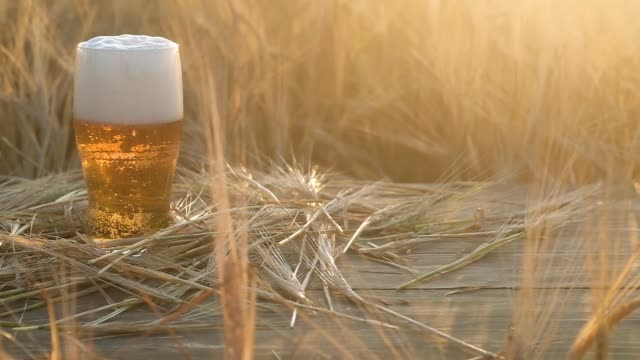 a mug of pale yellow beer sits on a wooden table in a wheat field. - orzo video stock e b–roll