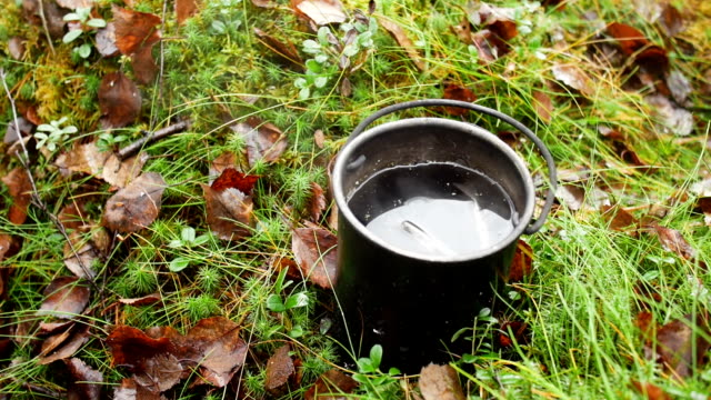 Mug tea outdoor in the forest on the moss video
