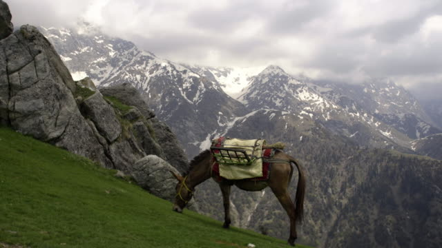maultier weiden am berghang - himachal pradesh stock-videos und b-roll-filmmaterial