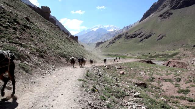 Mules Running in Aconcagua Valley, Argentina video