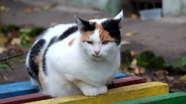 色とりどりの猫のベンチに座っているし、周りに見える - ベンチ点の映像素材/bロール