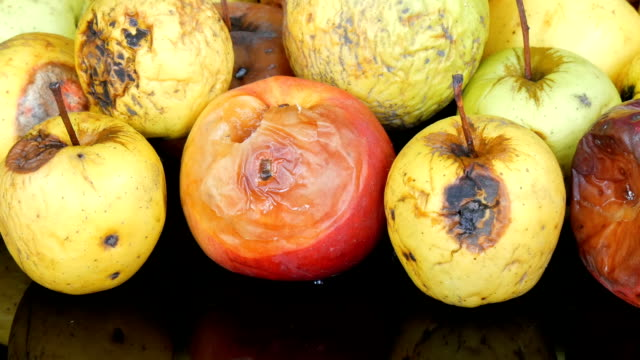 色とりどりの腐った熟成りんご - 腐敗点の映像素材/bロール