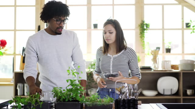 Multi-ethnic couple taking care of kitchen herbs Millennial multi-ethnic couple taking care and watering kitchen herbs at their apartment, woman eating blueberries potted plant stock videos & royalty-free footage
