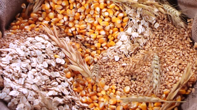 multiple grain mixing in Sack multiple grain mixing in Sack,  Slow motion rice cereal plant stock videos & royalty-free footage