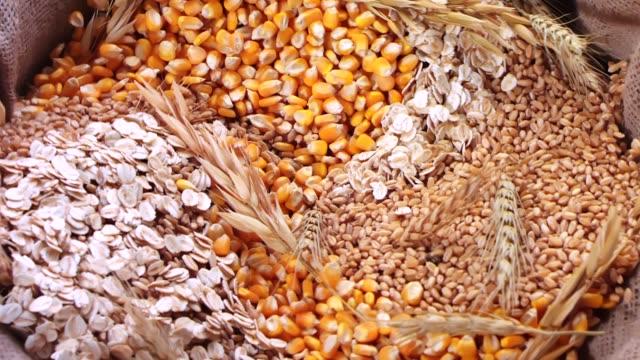 flera korn blandning i säck - ris spannmålsväxt bildbanksvideor och videomaterial från bakom kulisserna