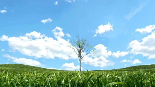 mehrere bäume wachsen - kulturpflanze stock-videos und b-roll-filmmaterial