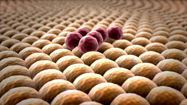 multiplication of cells video