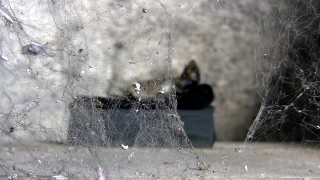 mummy behind spider web - spindelväv bildbanksvideor och videomaterial från bakom kulisserna