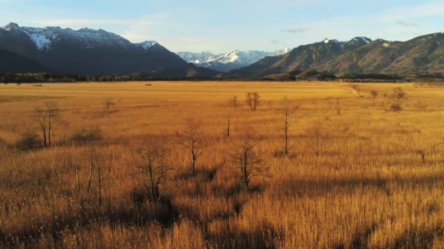 murnauer moos view direction garmisch mountains part 2 - aerial 4k - savanne stock-videos und b-roll-filmmaterial