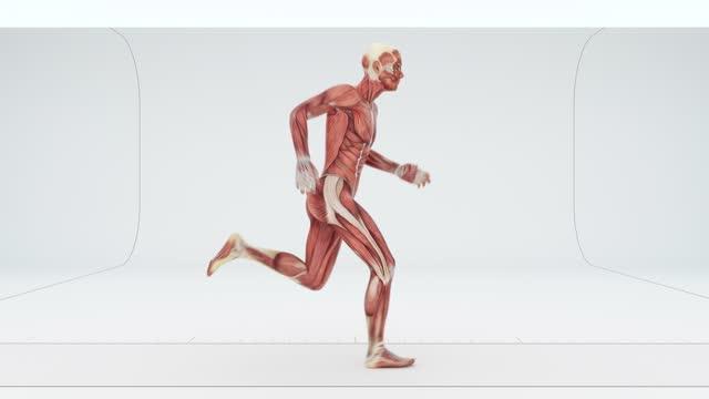 muskler av en rinnande man - lem kroppsdel bildbanksvideor och videomaterial från bakom kulisserna