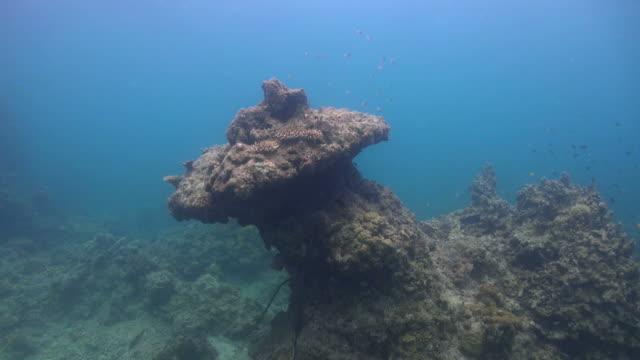 Mushroom Coral video