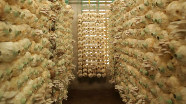 Mushroom farm video