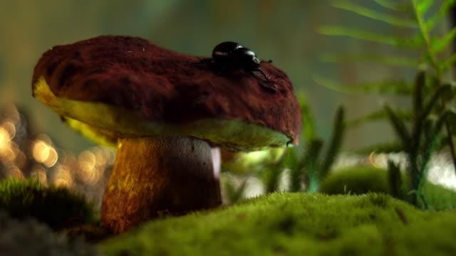 svamp i en saga forest-makro - höst plocka svamp bildbanksvideor och videomaterial från bakom kulisserna