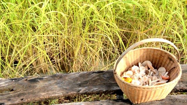 svamp i risfält - höst plocka svamp bildbanksvideor och videomaterial från bakom kulisserna