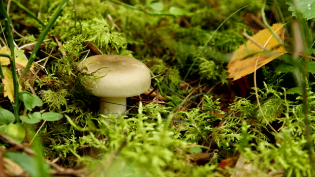 Bидео mushroom in the forest
