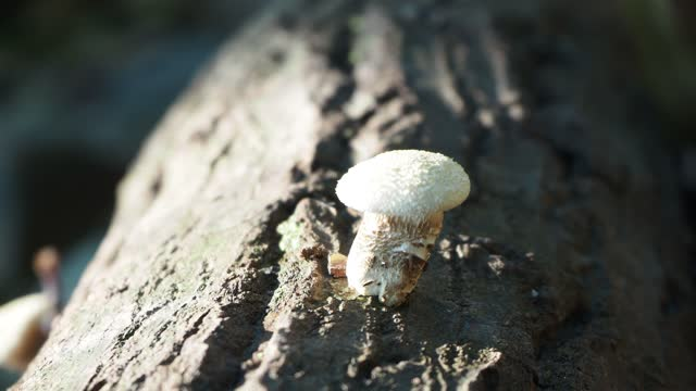 Mushroom on log in forest