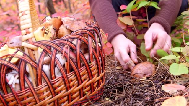 Mushroom Picking video