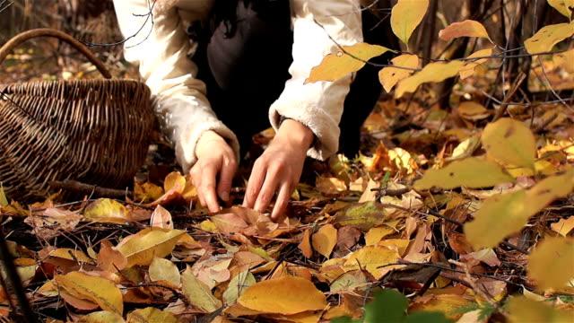 svamp säsong. gyllene höst. en kvinnlig picker finner svamp i gula löv. - höst plocka svamp bildbanksvideor och videomaterial från bakom kulisserna