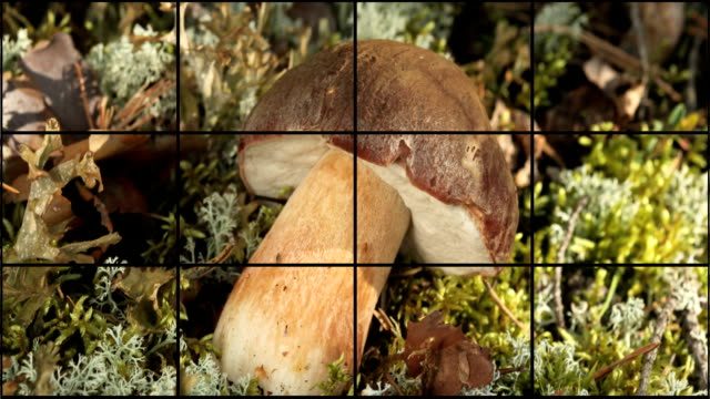 mushrooms and berries montage - superfoods stock videos and b-roll footage