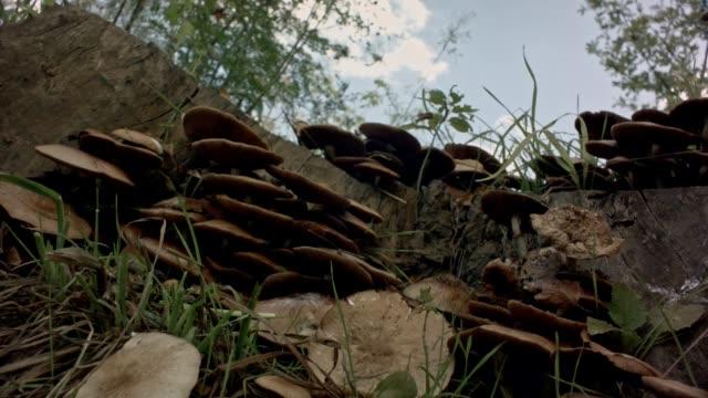 Mushrooms Beautifull Slider Shot video