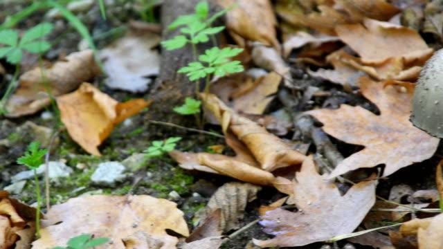 Mushrooms growing on grass lawn 4k stock video